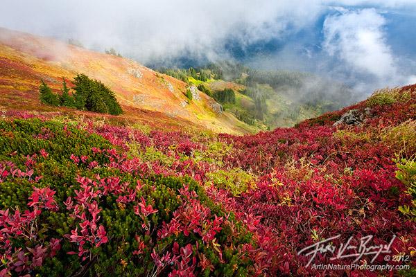 Floris Van Breugel - Northern Cascades